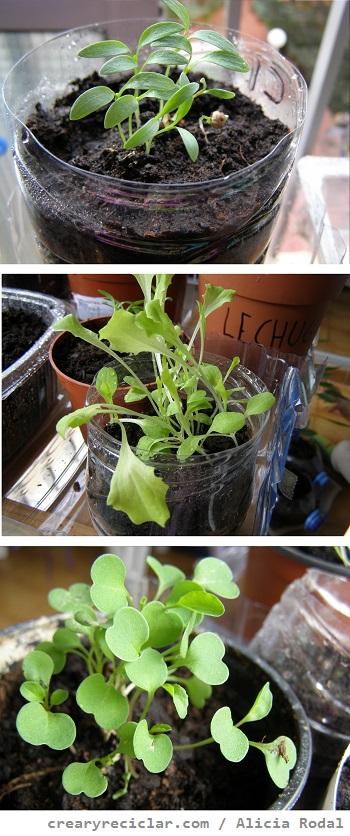 Cómo hacer varios semilleros con diferentes envases reciclados, para tener tu huerta en casa