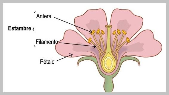 partes de una flor